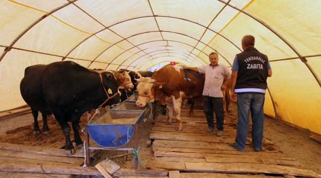 Yenimahalle'de Kurban Bayramı Hazırlıkları Tamamlandı