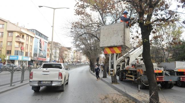 Ankara'da Ağaçlara Kışlık Bakım