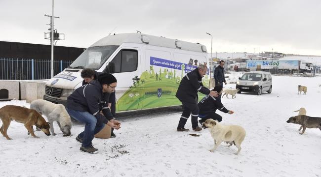 Büyükşehir'den Sokak Hayvanlarına Yem Desteği
