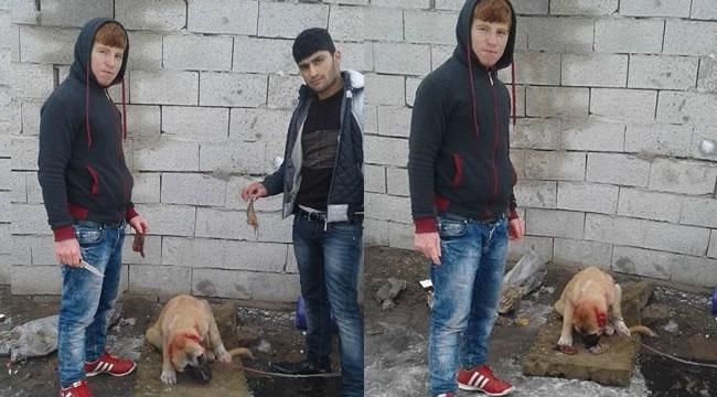 Köpek Canileri Yakalandı! Alacakları Ceza Sadece ''250 TL''