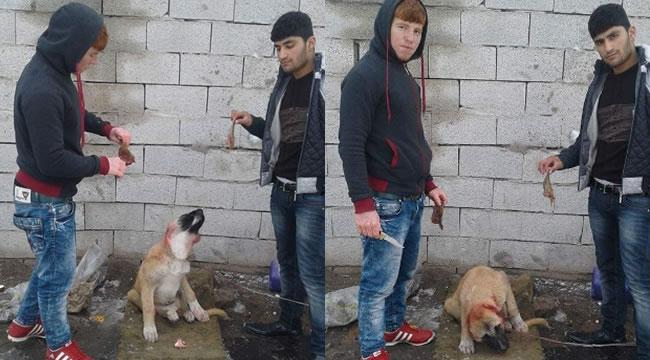 Melih Gökçek'ten Köpek Canileri İçin Çağrı: ''Polise İhbardır''
