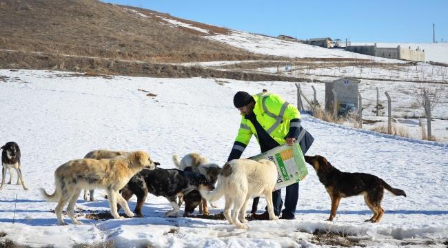 18 Köpeğin Katledildiği Haberi Pursaklar Belediyesi'ni Harekete Geçirdi