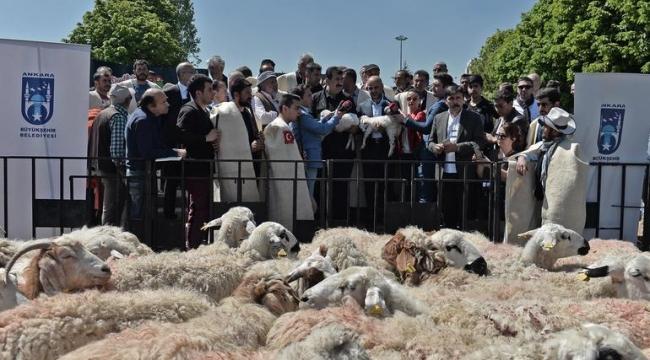 Ankara'nın Göbeğine Çiftlik Kuruluyor