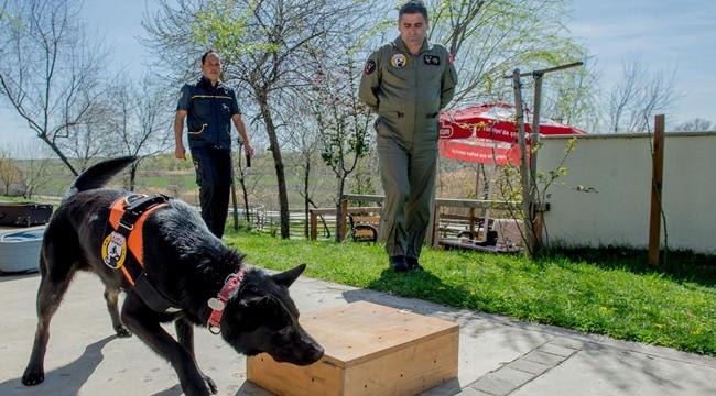 Ankara'da K-9 Köpekleriyle Güvenlik