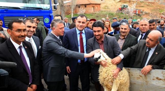 Çankaya'nın 440 Koyunu İki Yılda Bin 153 Oldu