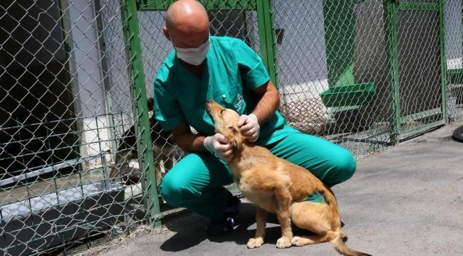 Çankaya'da Sokak Hayvanı Popülasyonu İçin Özel Çalışma