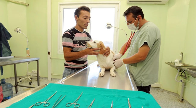Büyükşehir'den Pet Shop Eğitimi... İşte Eğitim İçin Gerekli Bilgiler...