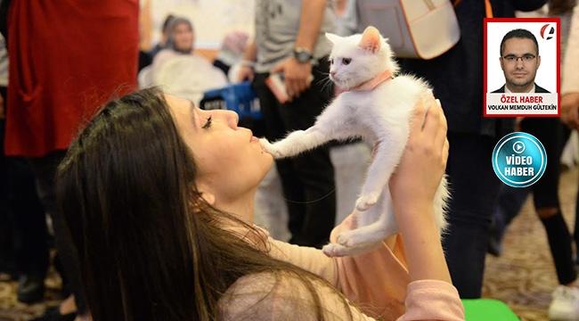 Pursaklar'da Kediler Podyuma Çıktı