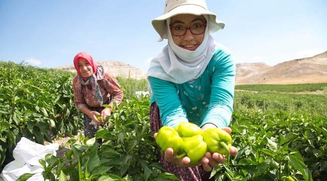Tarım ve Hayvancılığa Tam Destek! Büyükşehir Bitki Koruma Ürünlerini Çiftçilerin Kullanımına Verecek