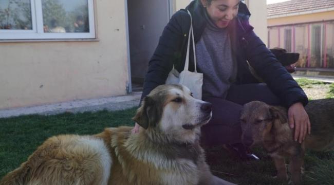 ODTÜ'lü Öğrenciler Mamak'taki Sokak Hayvanları İçin Tasarlayacak