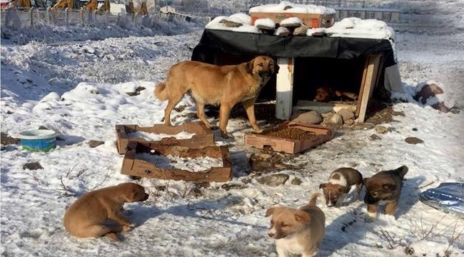 Keçiören'de Sokak Hayvanları Unutulmadı