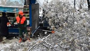ZARAR BÜYÜK! Kar Yağışı Sonrası Bakın Ankara'da Kaç Ağaç Zarar Gördü...