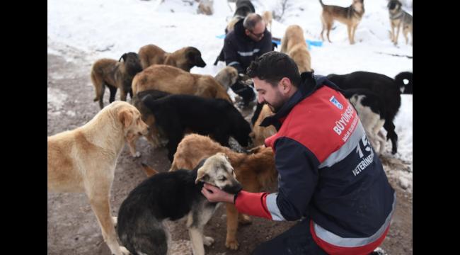 150 Noktada Besleme Çalışması! Ankara'da Sokak Hayvanları Unutulmadı...