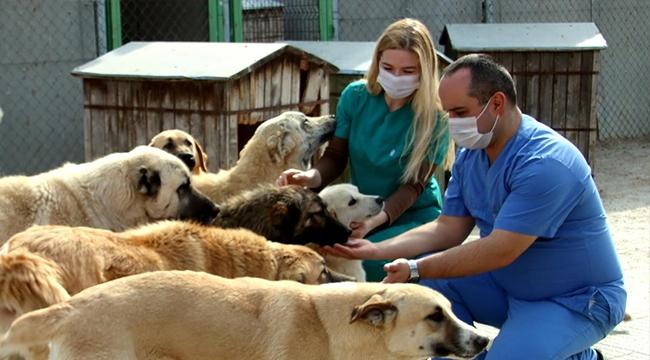 Biten İlişkilerin Sonu Barınak! Çankaya'da Bin 734 Sokak Hayvanı Sahiplendirildi...