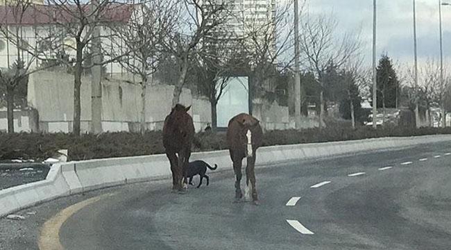 Dikkat At Çıkabilir! Ankara'daki Bu Görüntü Görenleri Hayrete Düşürdü...