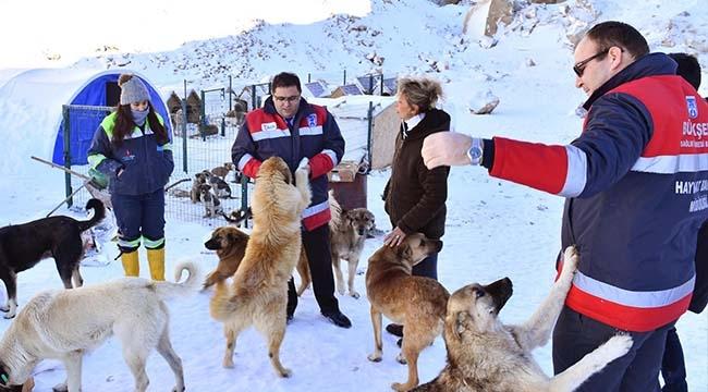 Ankara'da Sokak Hayvanları Güvende! Büyükşehir'den Gıda Desteği...