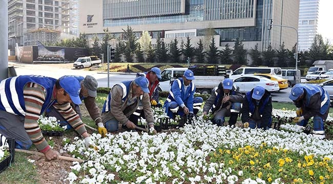 Ankara'da Kış Çiçekleri