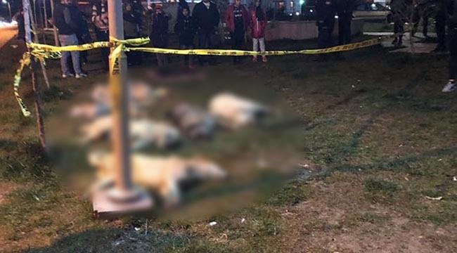 Ankara'da Vahşet! Batıkent'te 13 Sokak Köpeği Zehirlendi... İşte Son Durum...