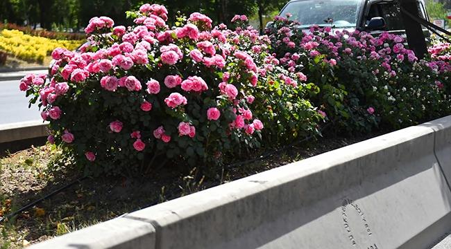 Ankara Rengarenk Çiçeklerle Donatılıyor