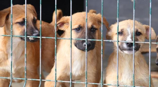 Çankaya Terk Edilen Hayvanlara Sahip Çıkıyor