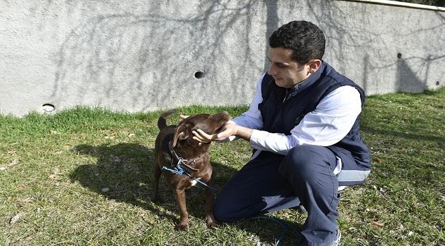 Mamak Sokak Hayvanlarını Yeni Yuvalarına Kavuşturuyor