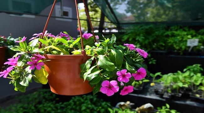 Başkent'in Çiçek Evi