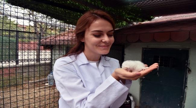 Hayvanat Bahçesi'nin Minikleri Başkentlileri Bekliyor