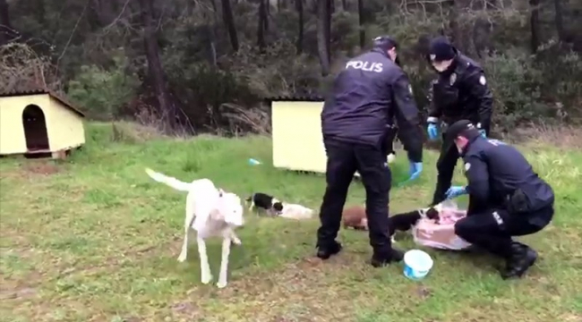 Polis ekipleri, sokak hayvanlarını elleriyle besledi