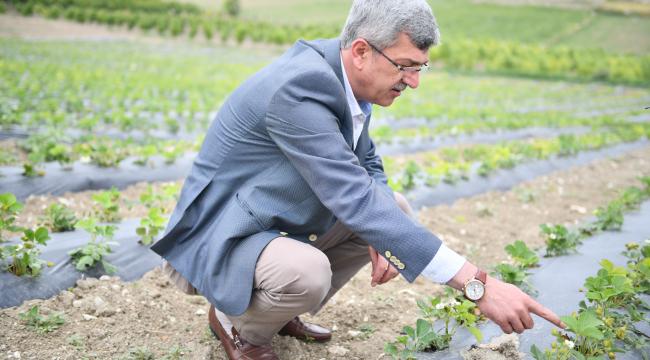Beypazarı'ndaki dev proje meyvelerini vermeye başladı