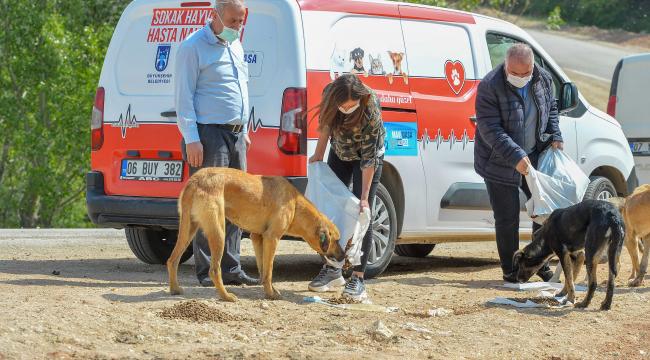 Başkent'ten sokak hayvanlarına 461 ton mama