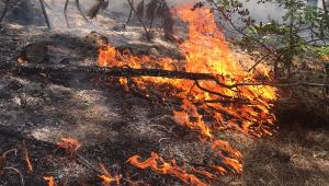 Kızılcahamam'daki Soğuksu Milli Parkı'nda ikinci yangın