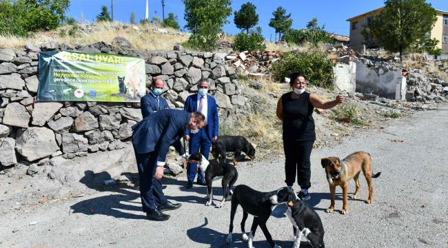Büyükşehir'den hayvanseverlerle iş birliği