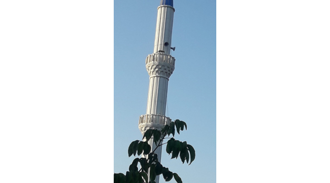 Cami minaresinde dolaşan tilki görenleri şaşırttı