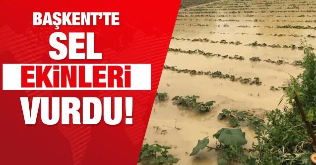 Başkent'te sel ekinleri vurdu